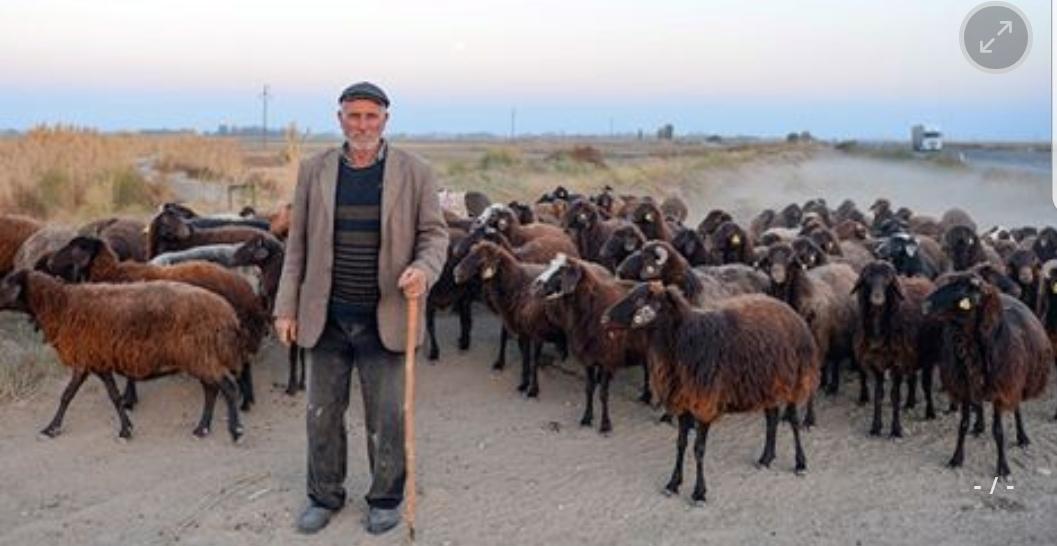 حلول الشتاء.. الرّحل يبدؤون رحلة النزول من الجبال شرقي تركيا