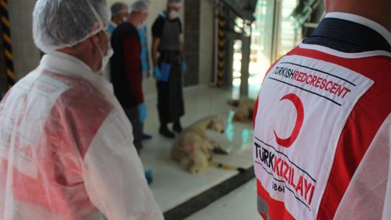 تركيا | تعلن عن موعد عيد الأضحى واسعار الأضاحي